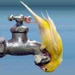 thirst during ramadan